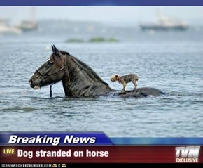 Breaking News - Dog stranded on horse