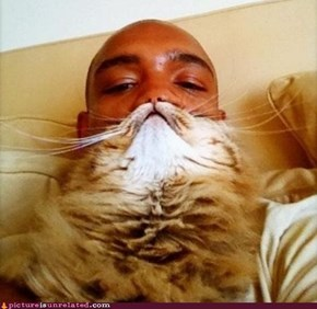 Catbeard