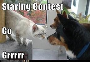 Staring Contest Go Grrrrr
