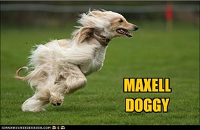 MAXELLDOGGY