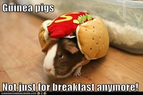 Guinea pigs  Not just for breakfast anymore!