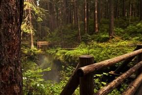 Rainforest, Sol Duc Falls,Washington