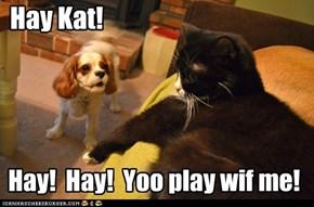 Hay Kat!