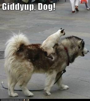Giddyup, Dog!