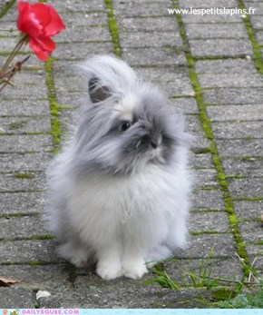 The Fluffiest of All Buns