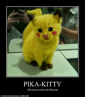 PIKA-KITTY