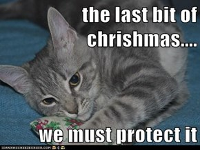 the last bit of chrishmas....  we must protect it