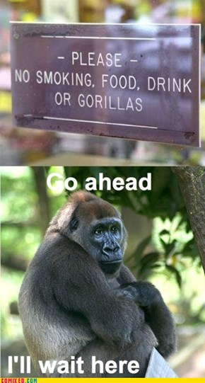 What Do You Have Against Gorillas?