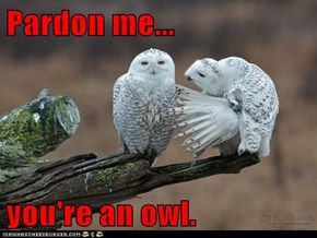 Pardon me...  you're an owl.