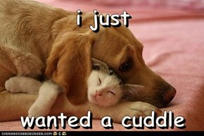 We All Need Cuddles Sometimes...