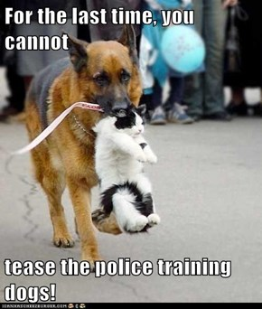 For the last time, you cannot  tease the police training dogs!