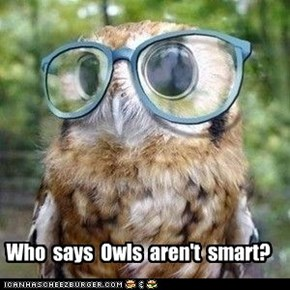 Who  says  Owls  aren't  smart?