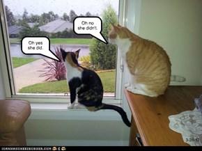 Cat Gossip.