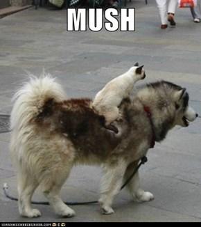 Lolcats: MUSH