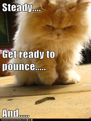 Steady.... Get ready to pounce..... And.....