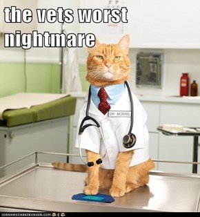 the vets worst nightmare
