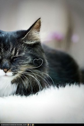 Cyoot Kitteh of teh Day: I Heart You Too, Whisker!