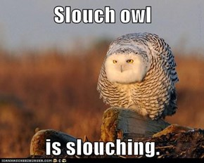 Slouch owl  is slouching.