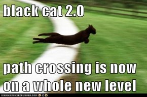 black cat 2.0  path crossing is now on a whole new level