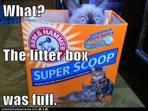 What? The litter box was full.