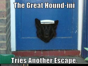 The Great Hound-ini  Tries Another Escape.