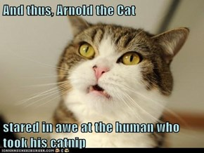 And thus, Arnold the Cat   stared in awe at the human who took his catnip