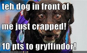 teh dog in front of me just crapped! 10 pts to gryffindor!