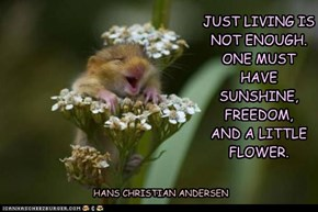 Animal Capshunz: An Adorable Rodent Doesn't Hurt Either