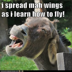 i spread mah wings as i learn how to fly!