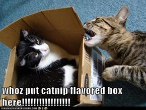 whoz put catnip flavored box here!!!!!!!!!!!!!!!!!