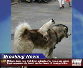 Breaking News - Midgets learn new trick from animals after rising gas prices force commuters to invest in other forms of transportation.