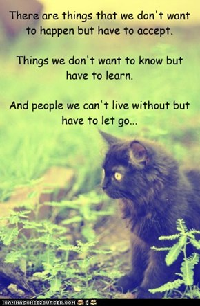 There are things that we don't want to happen but have to accept.Things we don't want to know but have to learn.And people we can't live without but have to let go...