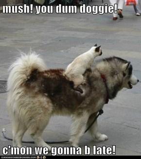mush! you dum doggie!  c'mon we gonna b late!