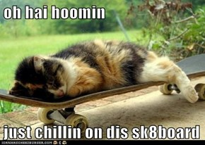 oh hai hoomin  just chillin on dis sk8board