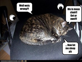 Egoistic cats: dey annoying but funny!