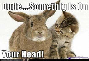 Dude....Somethig Is On  Your Head!