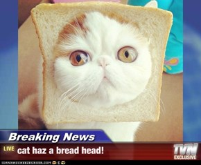 Breaking News - cat haz a bread head!