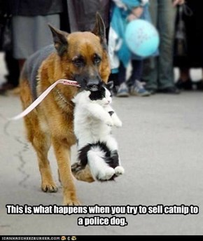 This is what happens when you try to sell catnip to a police dog.