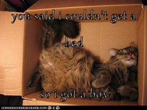 you said i couldn't get a bed  so i got a box