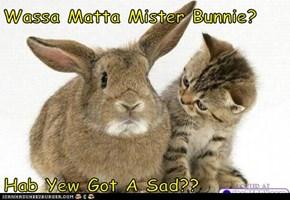 Wassa Matta Mister Bunnie?  Hab Yew Got A Sad??