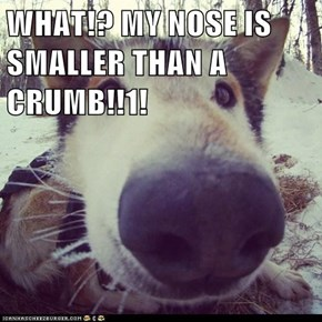 WHAT!? MY NOSE IS SMALLER THAN A CRUMB!!1!