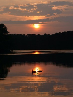 Canada Geese at Sunset, Morton, Mississippi
