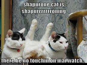 shapurone cat