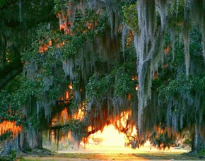 Fontainebleau State Park in Mandeville, Louisiana, USA