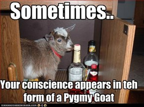 Animal Capshunz: What Would Pygmy Goat Do?