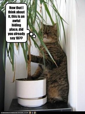When cats hide