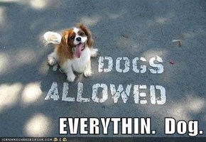 EVERYTHIN.  Dog.