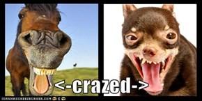 <-crazed->