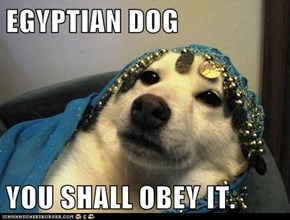 EGYPTIAN DOG  YOU SHALL OBEY IT.