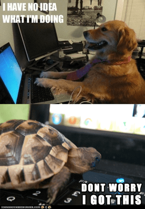 Techie Tortoise Has Got You Covered